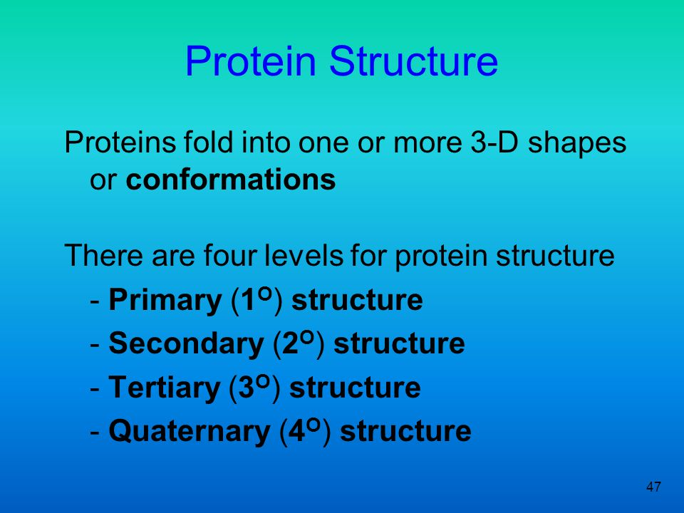 Protein Structure Proteins fold into one or more 3-D shapes or conformations. There are four levels for protein structure.