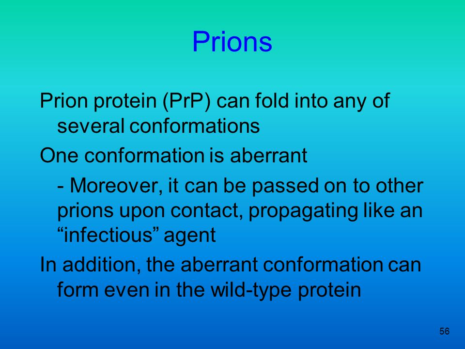 Prions Prion protein (PrP) can fold into any of several conformations