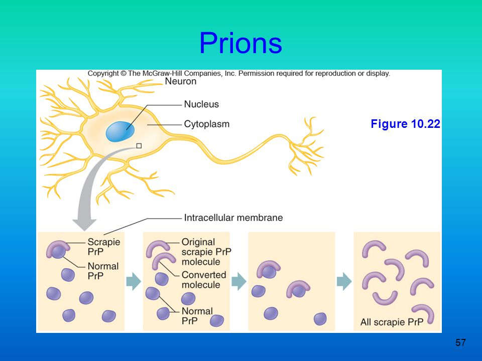 Prions Figure 10.22 57