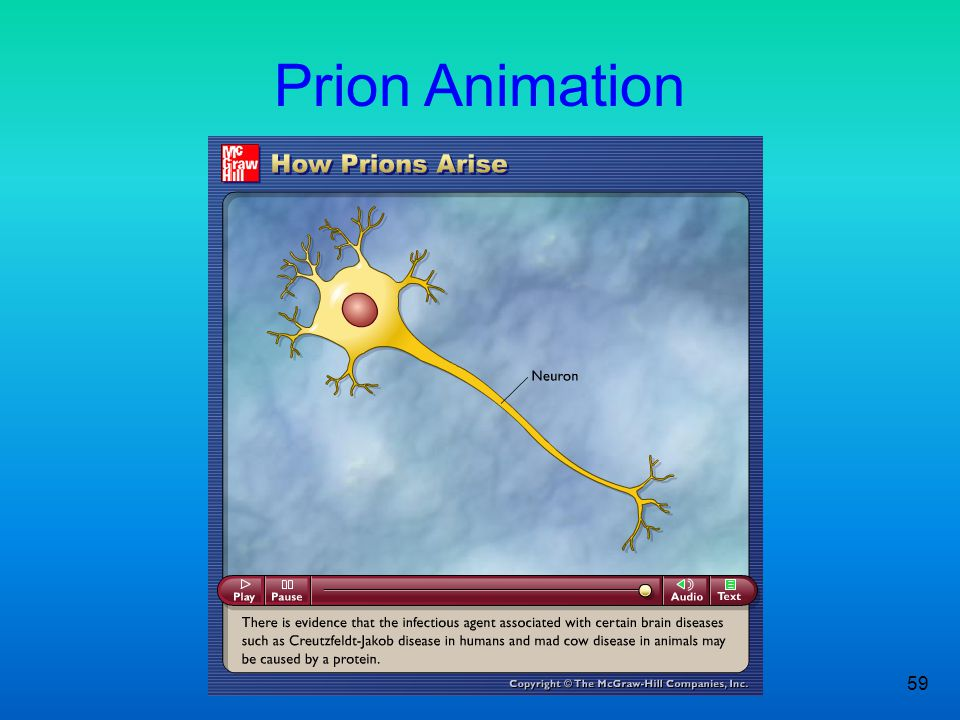 Prion Animation Figure 2.3