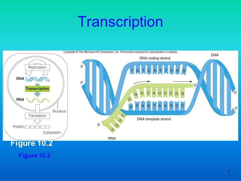 Transcription Figure 10.2 Figure 10.2