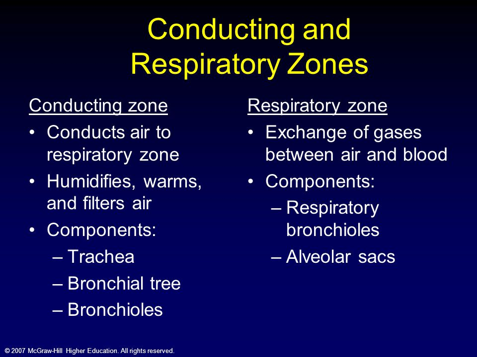Conducting and Respiratory Zones
