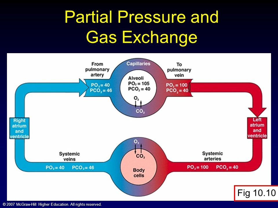 Partial Pressure and Gas Exchange