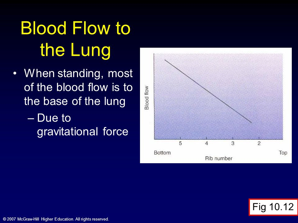 Blood Flow to the Lung When standing, most of the blood flow is to the base of the lung. Due to gravitational force.