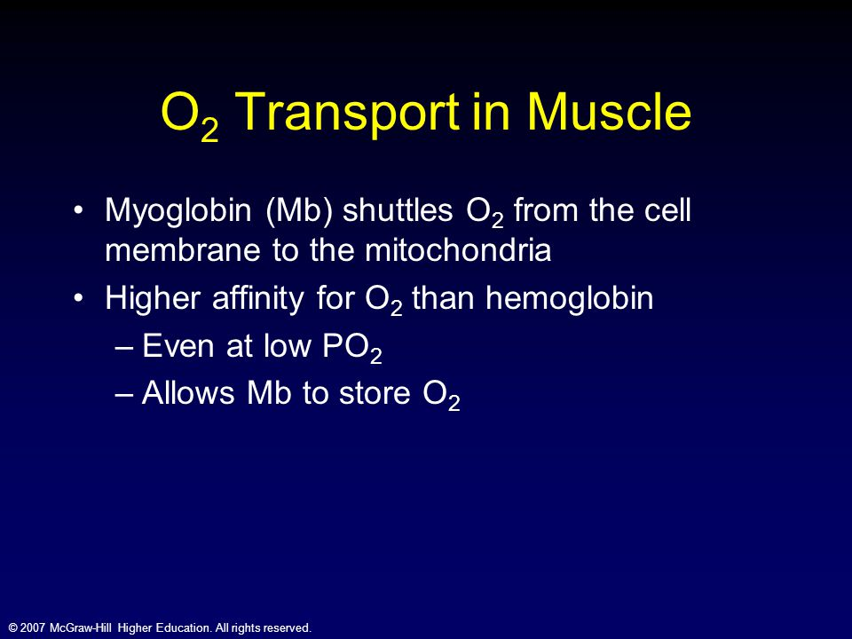 O2 Transport in Muscle Myoglobin (Mb) shuttles O2 from the cell membrane to the mitochondria. Higher affinity for O2 than hemoglobin.