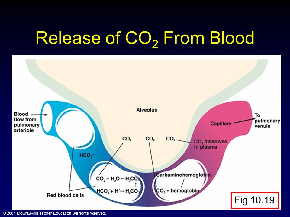 Release of CO2 From Blood