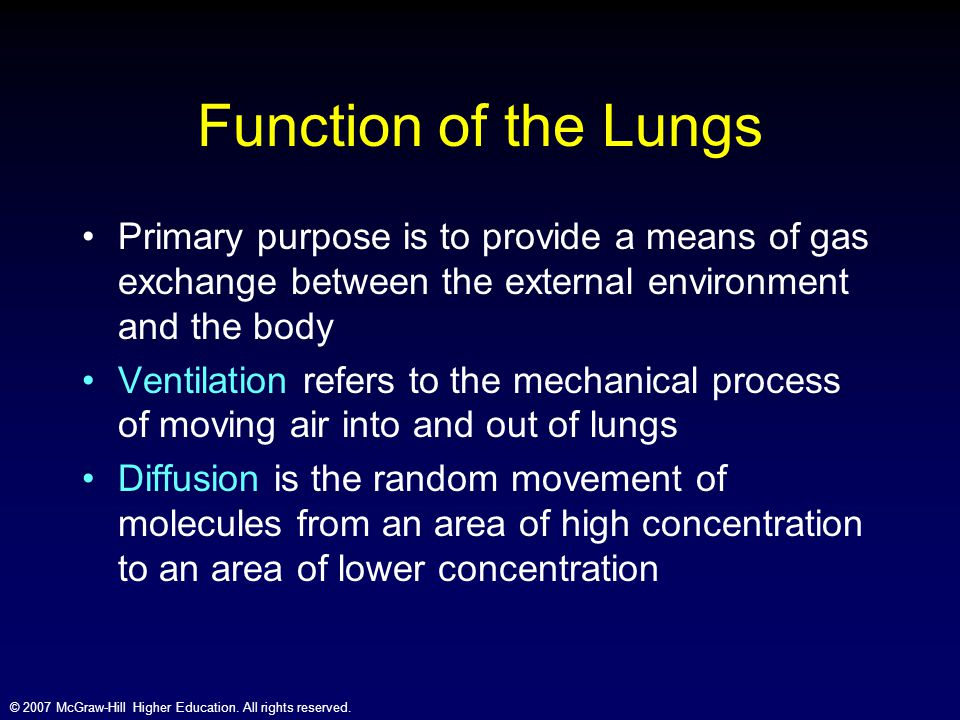 Function of the Lungs Primary purpose is to provide a means of gas exchange between the external environment and the body.