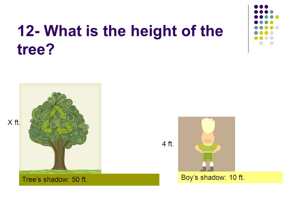 12- What is the height of the tree