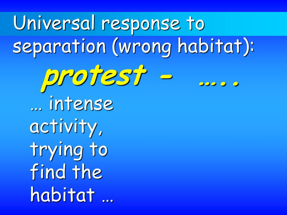 Universal response to separation (wrong habitat): protest - ….. … intense. activity, trying to.