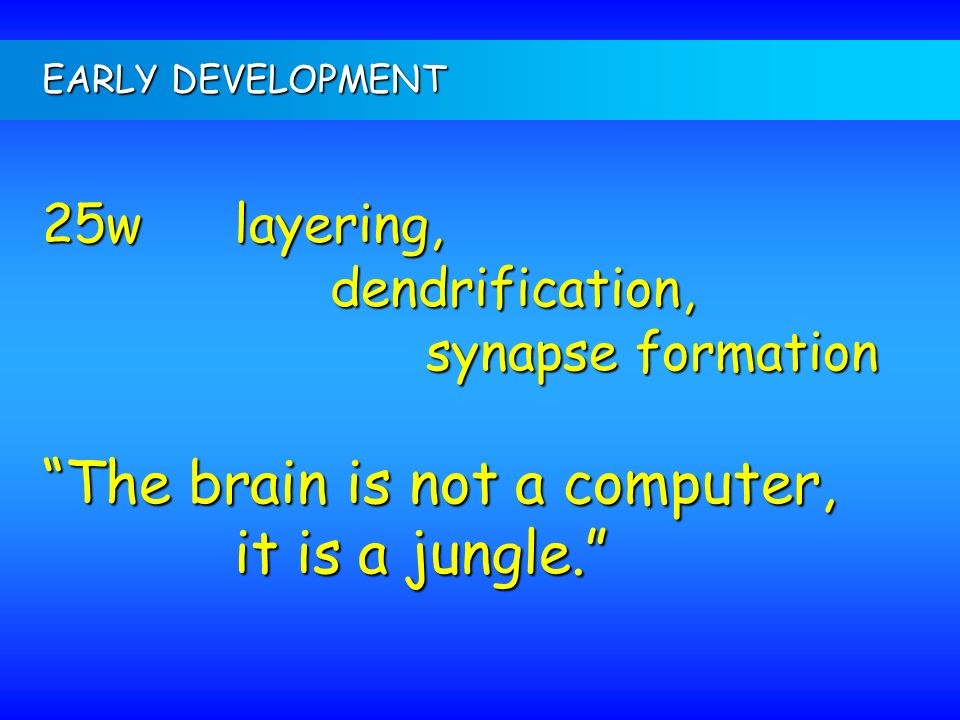 The brain is not a computer, it is a jungle.