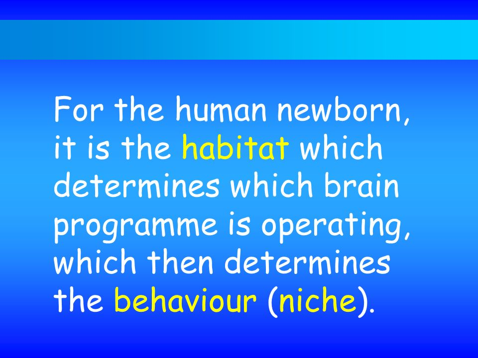 For the human newborn, it is the habitat which determines which brain programme is operating, which then determines the behaviour (niche).