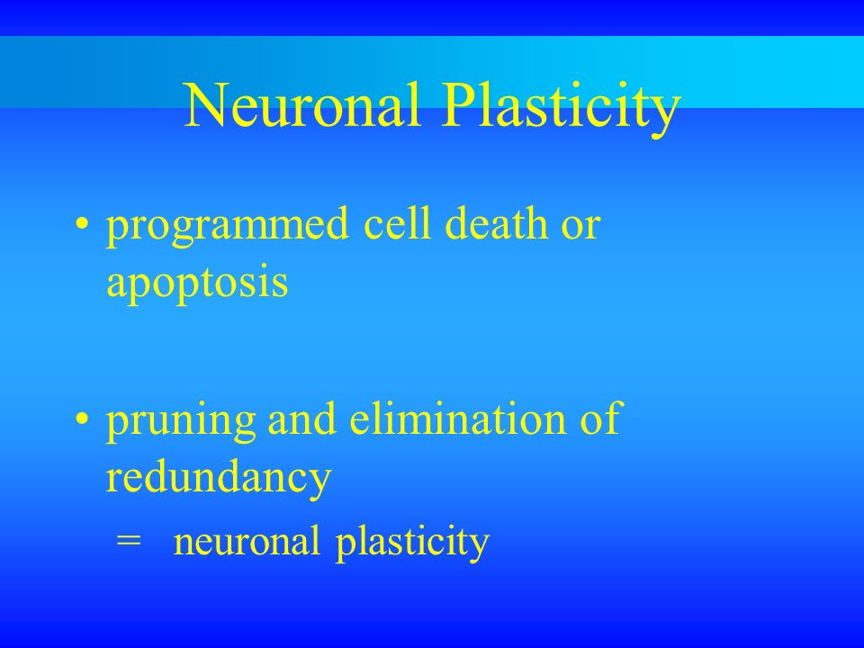 Neuronal Plasticity programmed cell death or apoptosis