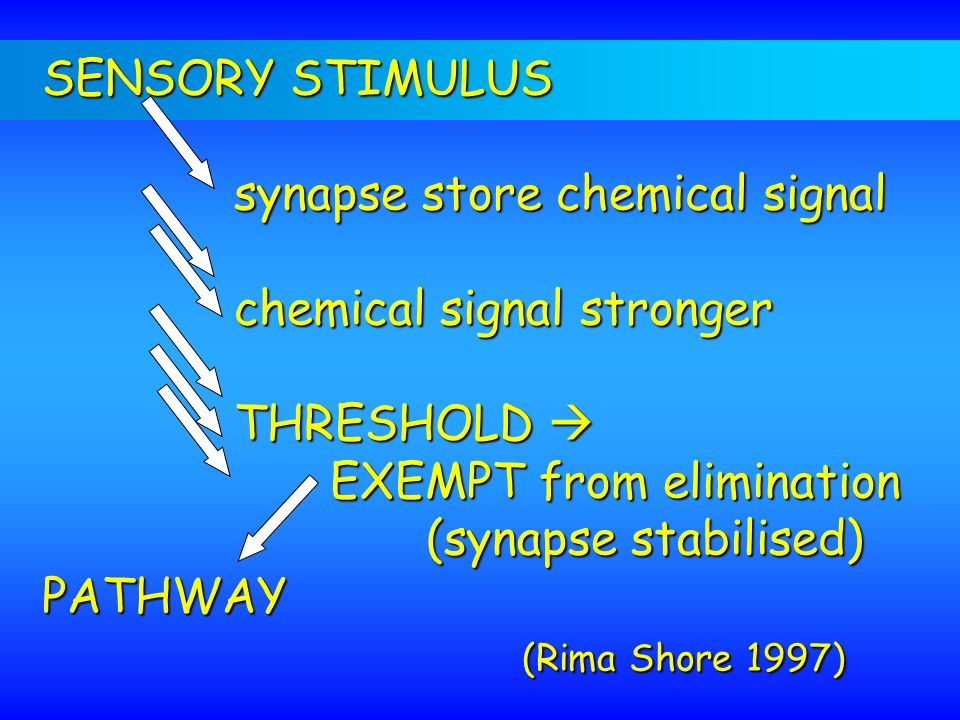 SENSORY STIMULUS synapse store chemical signal. chemical signal stronger. THRESHOLD  EXEMPT from elimination.