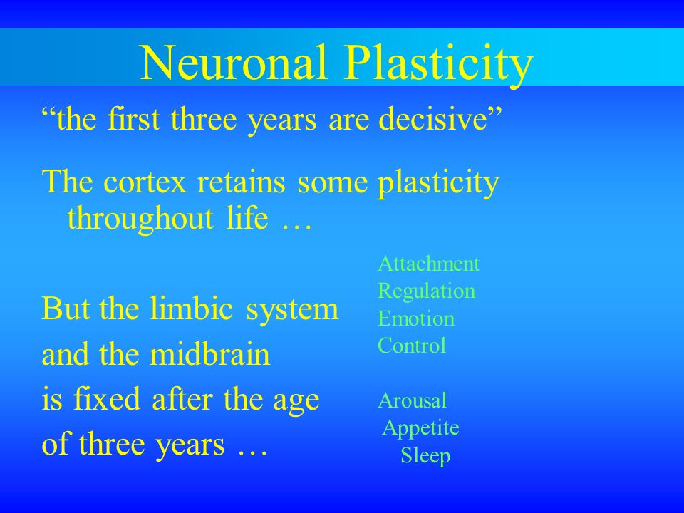 Neuronal Plasticity the first three years are decisive