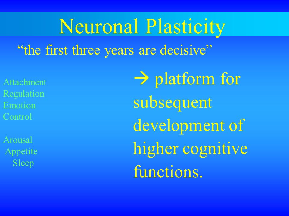 Neuronal Plasticity subsequent development of higher cognitive
