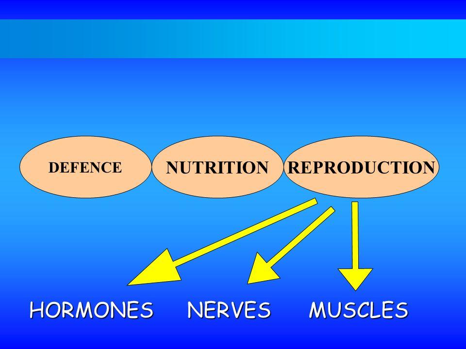 HORMONES NERVES MUSCLES