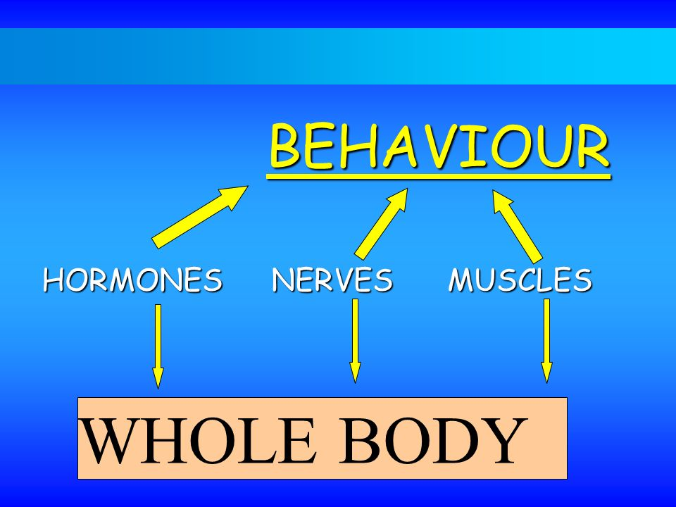 BEHAVIOUR HORMONES NERVES MUSCLES WHOLE BODY