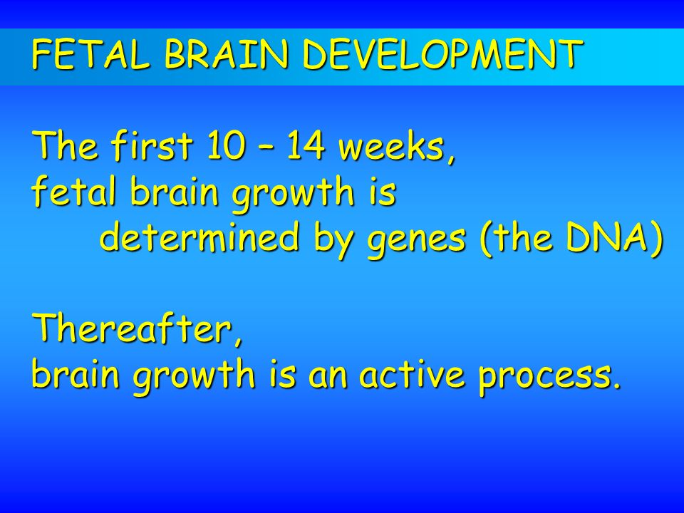 FETAL BRAIN DEVELOPMENT