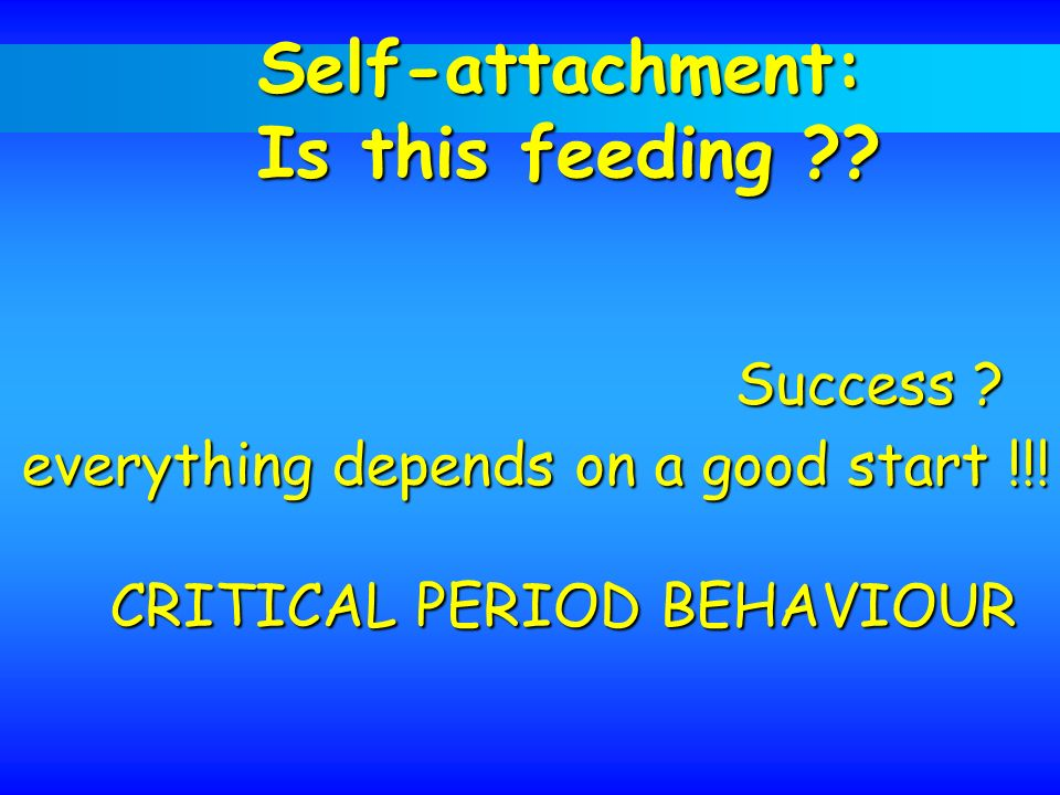 Self-attachment: Is this feeding Success