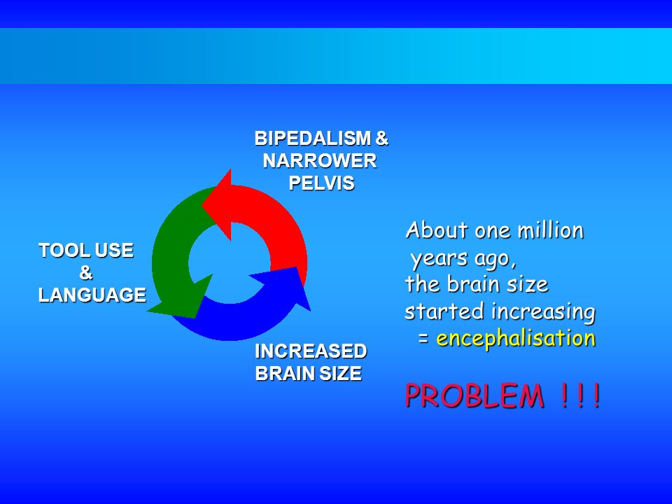PROBLEM ! ! ! About one million years ago, the brain size