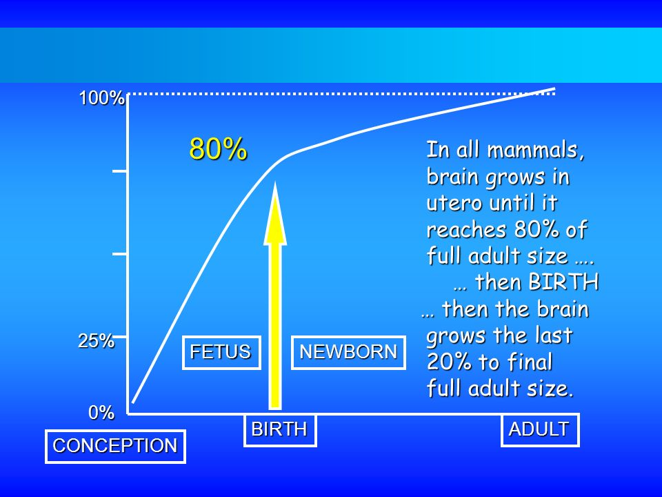 80% In all mammals, brain grows in utero until it reaches 80% of