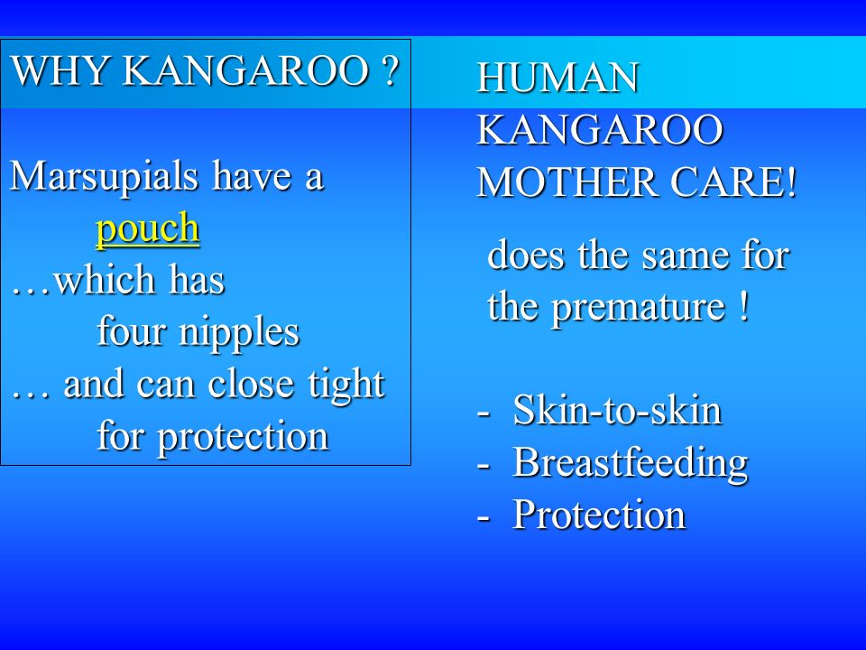 WHY KANGAROO Marsupials have a. pouch. …which has. four nipples. … and can close tight. for protection.