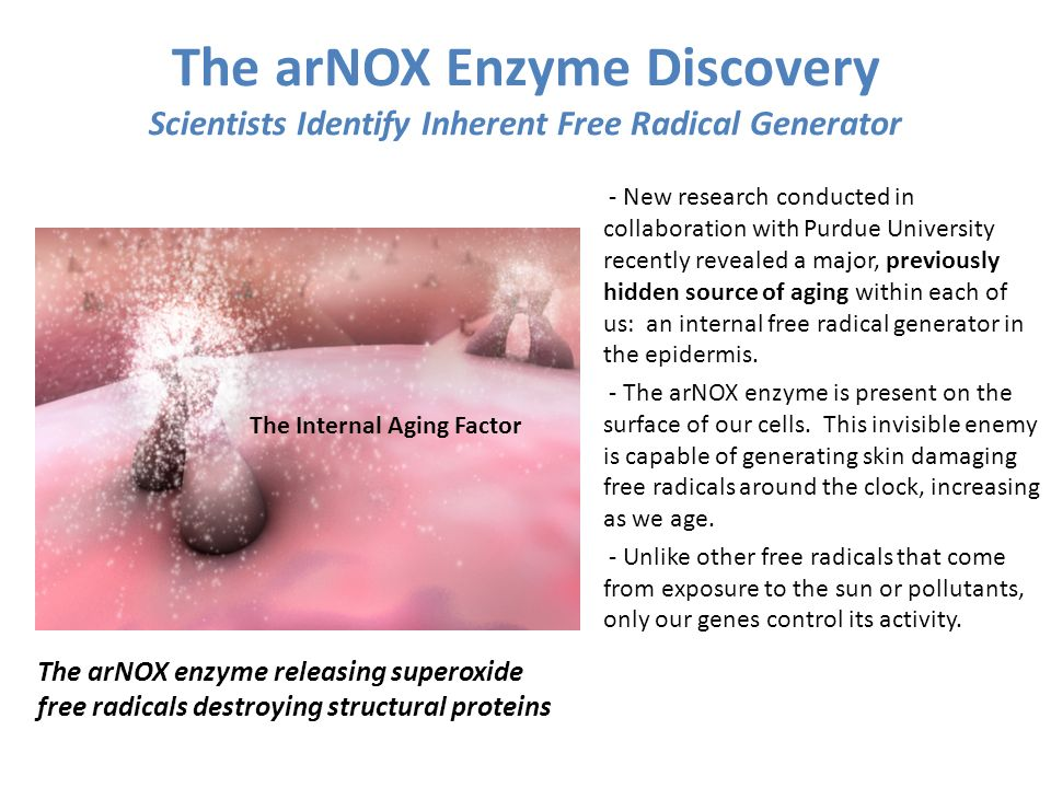 The arNOX Enzyme Discovery Scientists Identify Inherent Free Radical Generator