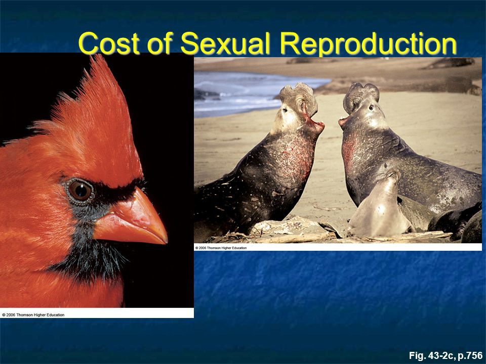 Cost of Sexual Reproduction
