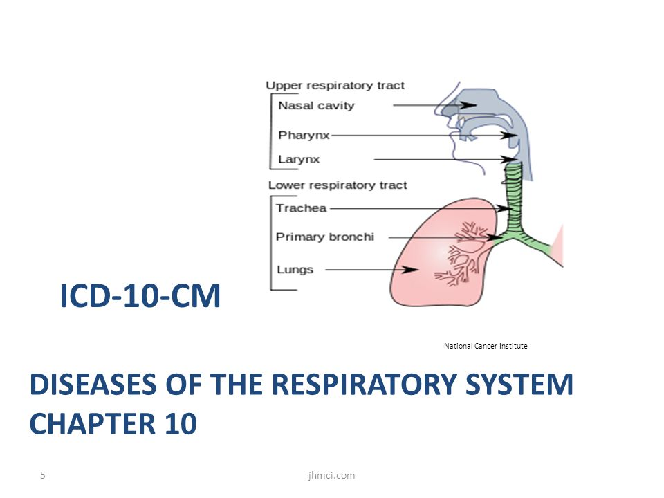 Diseases of the Respiratory System Chapter 10