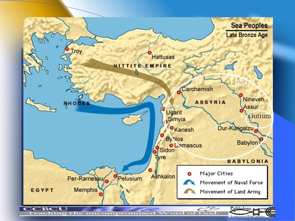 Tigris Gutium