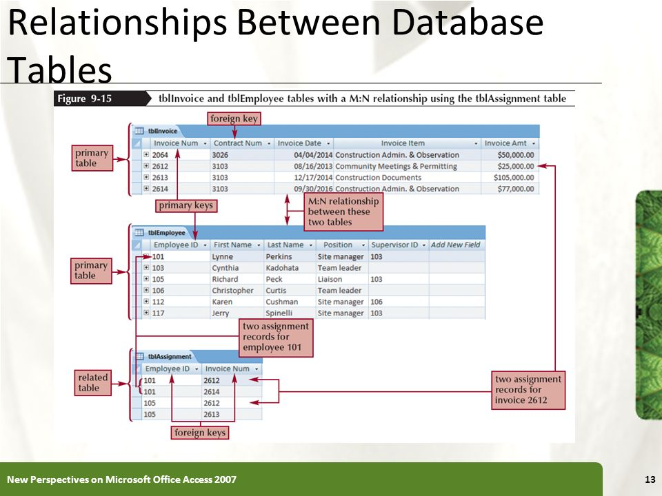 Relationships Between Database Tables
