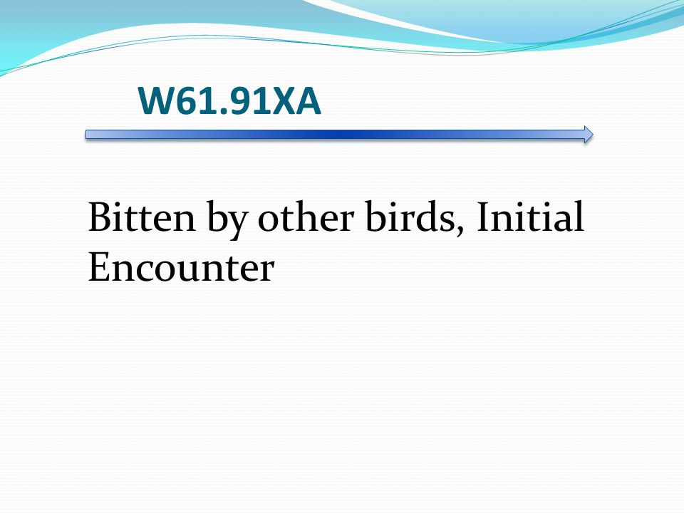 W61.91XA Bitten by other birds, Initial Encounter