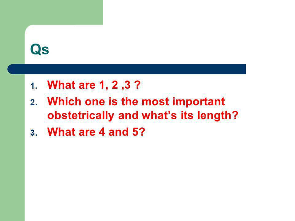QsWhat are 1, 2 ,3 .Which one is the most important obstetrically and what's its length.