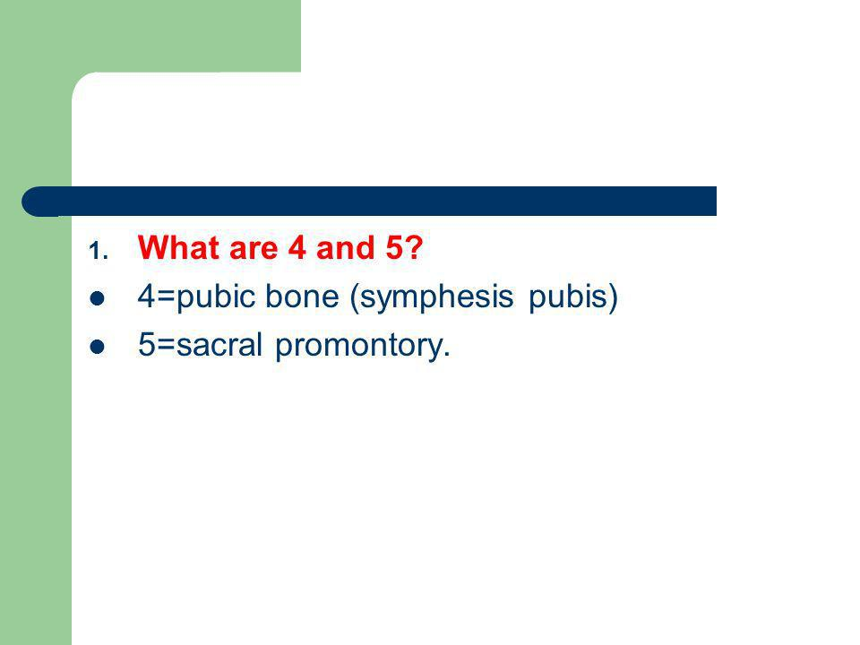 What are 4 and 5 4=pubic bone (symphesis pubis) 5=sacral promontory.