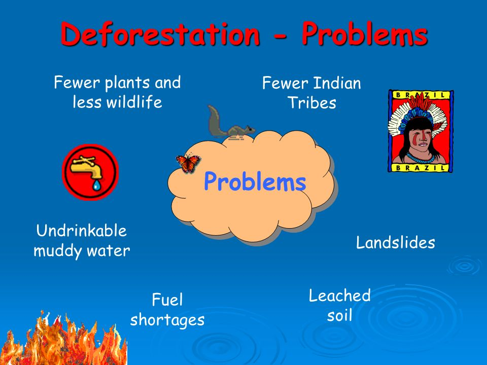 Deforestation - Problems