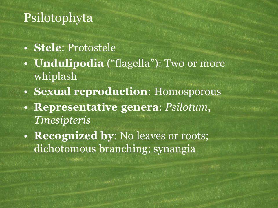 Psilotophyta Stele: Protostele