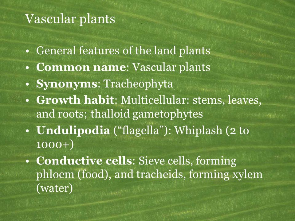 Vascular plants General features of the land plants