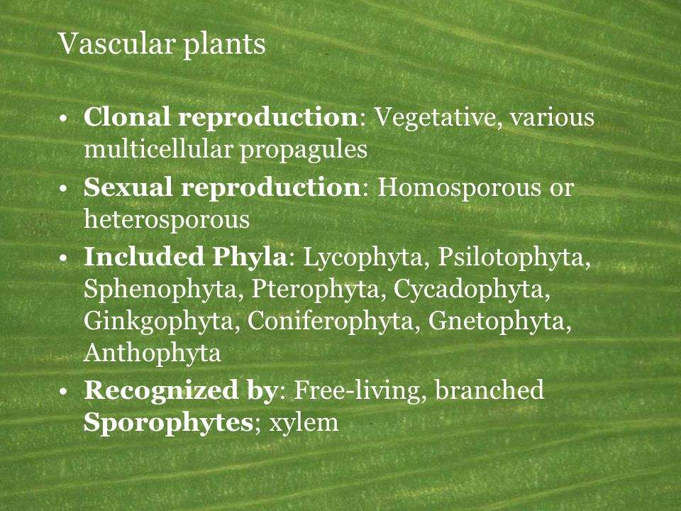Vascular plants Clonal reproduction: Vegetative, various multicellular propagules. Sexual reproduction: Homosporous or heterosporous.