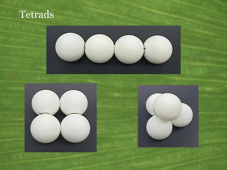 Tetrads This slide refers to the ping-pong ball models.