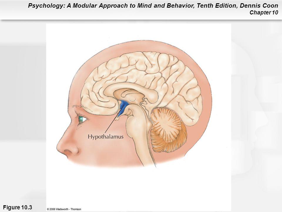 Figure 10.3 Location of the hypothalamus in the human brain.