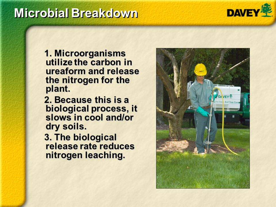 Microbial Breakdown 1. Microorganisms utilize the carbon in ureaform and release the nitrogen for the plant.