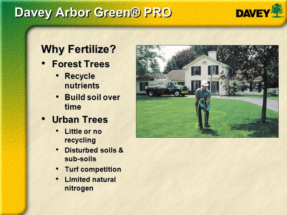 Davey Arbor Green® PRO Why Fertilize Forest Trees Urban Trees