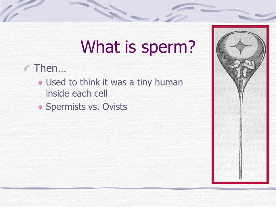 What is sperm Then… Used to think it was a tiny human inside each cell Spermists vs. Ovists