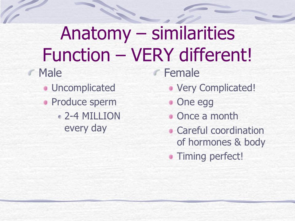 Anatomy – similarities Function – VERY different!