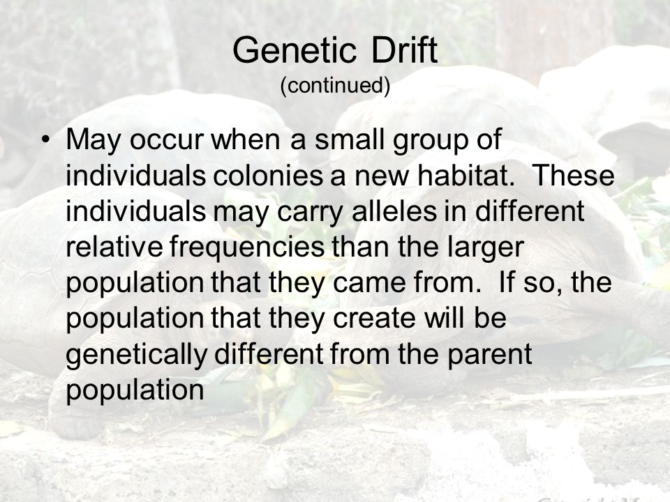 Genetic Drift (continued)