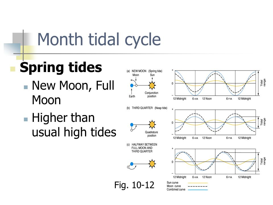 Month tidal cycle Spring tides New Moon, Full Moon
