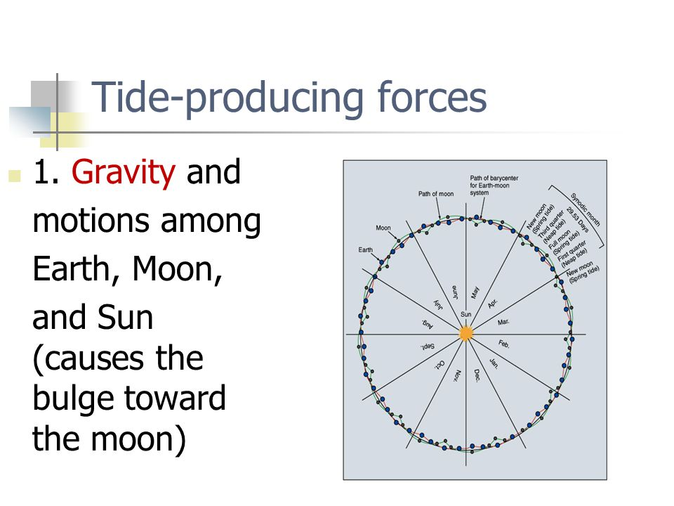 Tide-producing forces