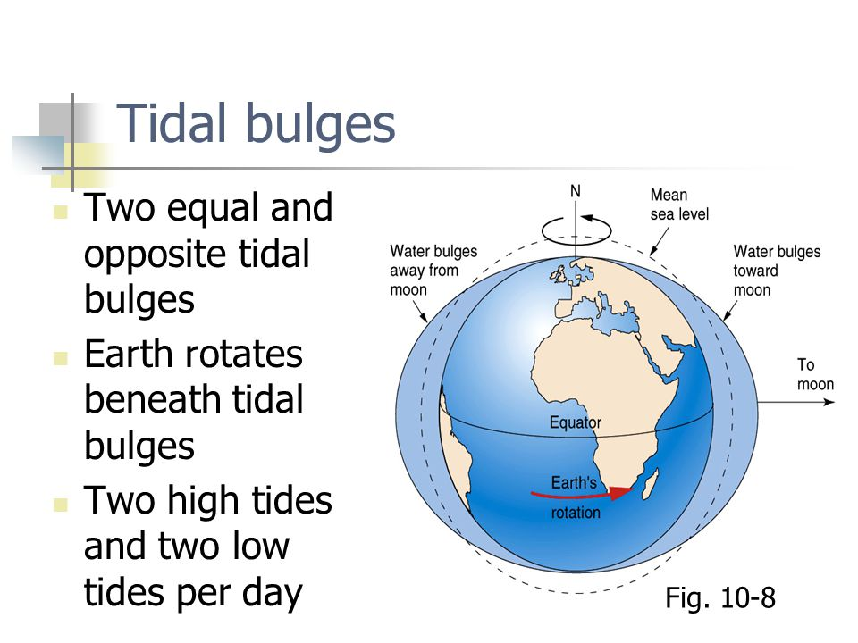 Tidal bulges Two equal and opposite tidal bulges