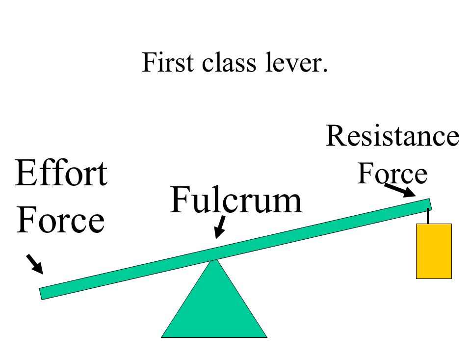 First class lever. Resistance Force Effort Force Fulcrum