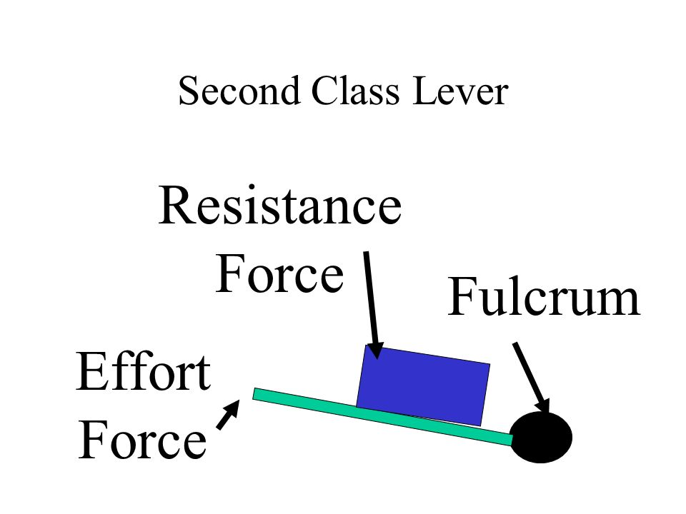 Second Class Lever Resistance Force Fulcrum Effort Force